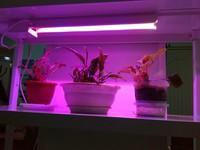 ASD светильник LED ФИТО 12W T8 900mm IP40 для роста растений 4690612006284
