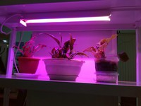 ASD светильник LED ФИТО 8W T8 600mm IP40 для роста растений 4690612006277